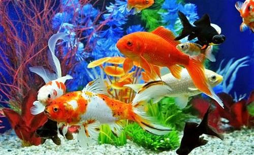 bể nuôi cá cảnh