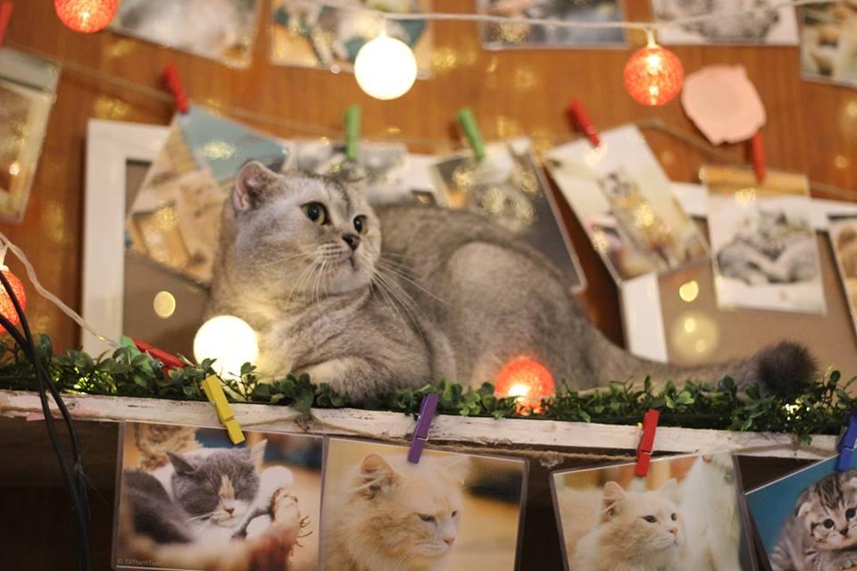quán cafe mèo