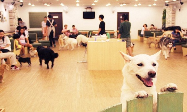 quán cafe thú cưng hachiko coffee