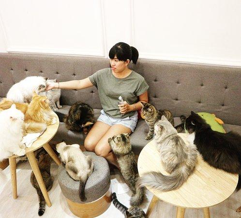 quán cafe ichicat-coffee