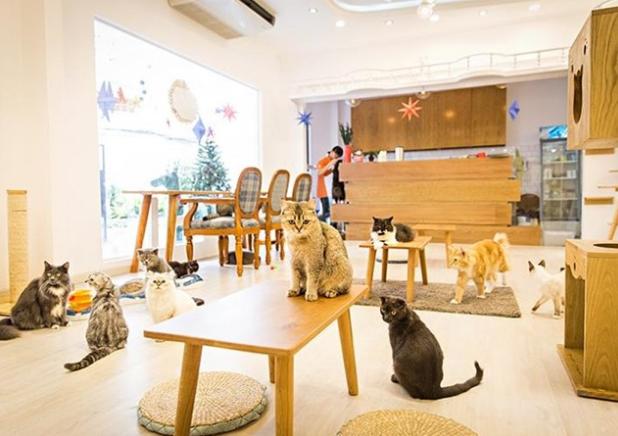quán cà phê ichicat coffee