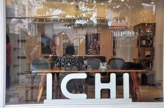quán cà phê thú cưng ichicat coffee