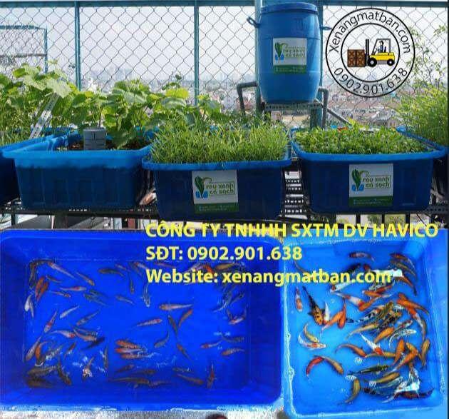 ứng dụng thùng nhựa nuôi cá