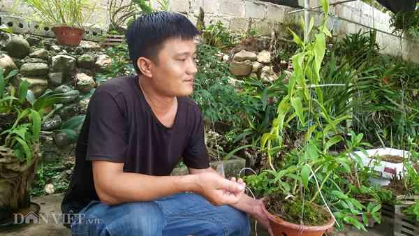 vuon-lan-rung